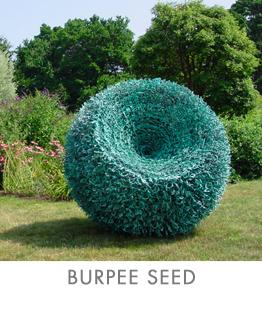 burpee-seed