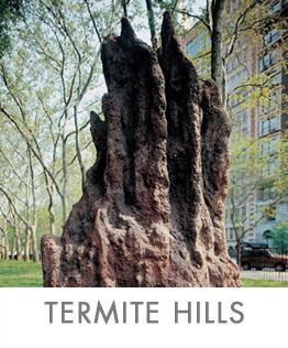 TERMITE-HILLS-2